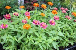 季節の花*